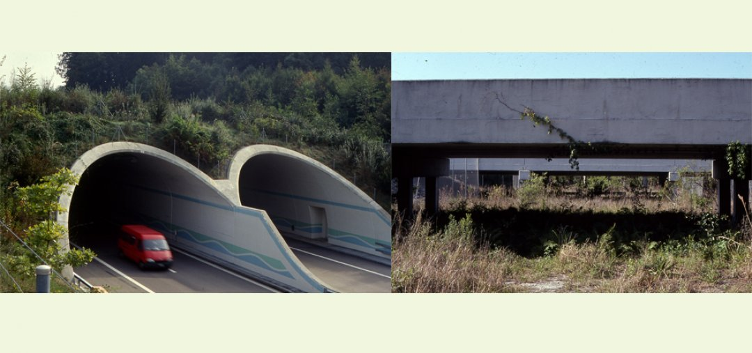A wildlife overpass (ecoduct) in Europe and large wildlife underpass in Florida for facilitating movement by a variety of wildlife across highways. Photo credit: Scott Jackson.