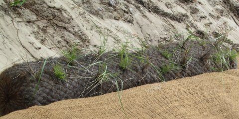 A typical coir roll planted with vegetation. (Source: Wilkinson Ecological Design)