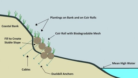 Cross-section of a bioengineering project with coir rolls on a bank exposed to waves.