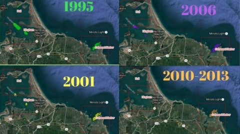 Above images show the changes in the presence of eelgrass beds in southeastern Massachusetts between 1995-2013.  Eelgrass is an underwater flowering seagrass in shallow coastal waters. In addition to sequestering carbon, eelgrass provides important habitat and improves water quality.  Direct threats to eelgrass includes nutrient and sediment pollution, scarring from boat propellers and chain anchors, and climate change events like rising temperatures and sea-level rise (NOAA 2012).