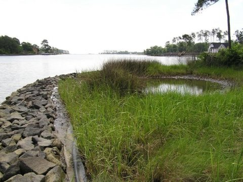 A marsh toe revetment with no scarp. Source: Center for Coastal Resources Management, Virginia Institute of Marine Science