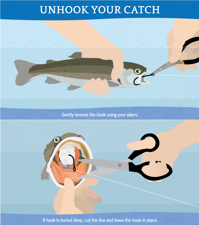 Practice responsible recreation use best methods for for How to catch a fish
