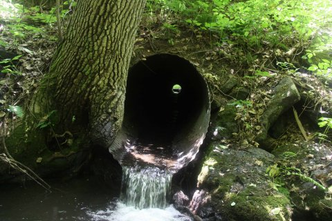 Most culverts under roads were designed to pass water, not fish or wildlife. Thus, many culverts represent significant barriers to the passage of aquatic organisms as well as some semi-aquatic wildlife, such as turtles. Photo credit: Scott Jackson