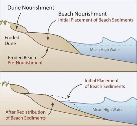 This diagram shows a beach and dune nourishment project that added sand to the seaward side of an eroded dune and beach profile to enhance the ability of the system to buffer wave impacts.