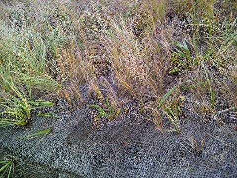 Vegetation growing up through a blanket (Source: Wilkinson Ecological Design)