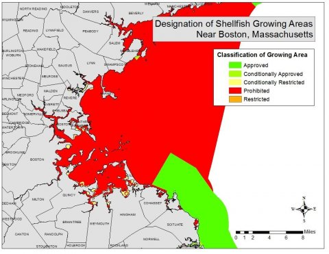 Designated shellfish growing areas in Massachusetts.  Shellfish, like oysters, provide multiple benefits to communities and the ecosystem, including the ability to fixate carbon within their shells. Data provided by Division of Marine Fisheries and accessed via MassGIS. Map Created by Amanda Davis