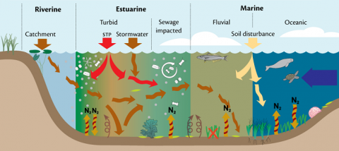 Intensification of the hydrological cycle is affecting the transport of nutrients and pollutants to downstream and coastal habitats, impacting fish movements, and restructuring food-webs and downstream habitats. Image credit: Jane Thomas