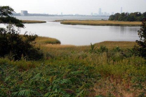 Salt marsh on Thompson Island. (Source: Mass Bays)