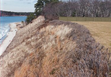 This lawn was regraded to slope inland, and a buffer of native shrubs was planted along the top of the bank to stabilize the area and control stormwater runoff. These measures reduced water flowing over the bank and enabled a successful bioengineering project with natural fiber blankets, coir rolls, and vegetation. (Photo: CZM)